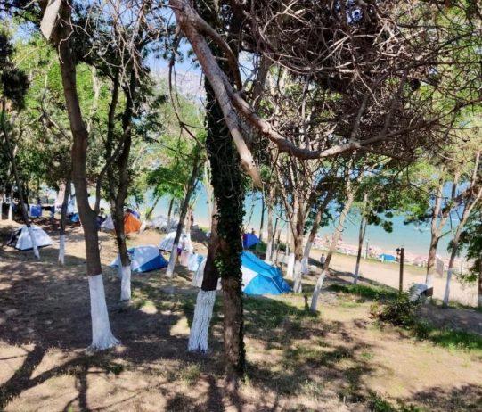 Sinop Orman Kampı