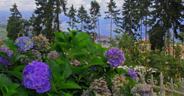 Trabzon Botanik Parkı