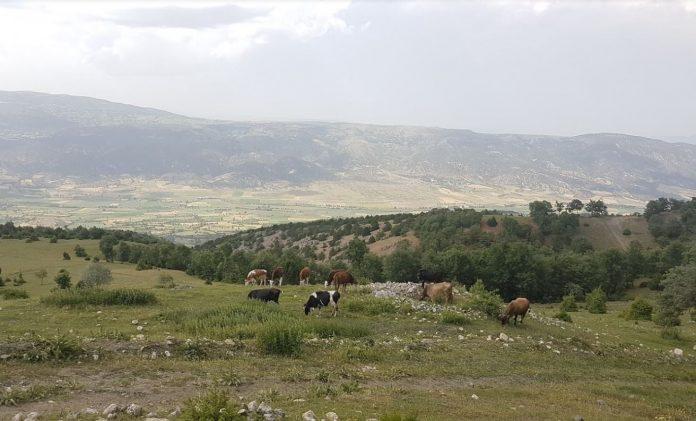 Asar Köyü Kamp Alanı