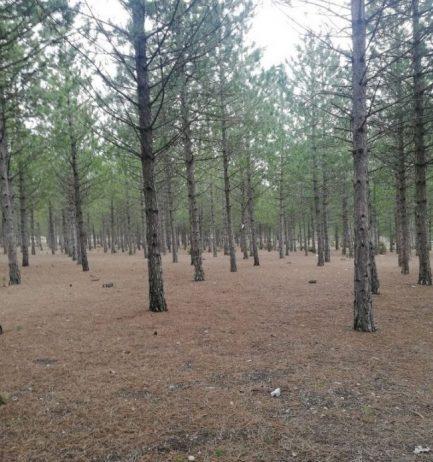 Kütahya Kent Ormanı Kamp Alanı