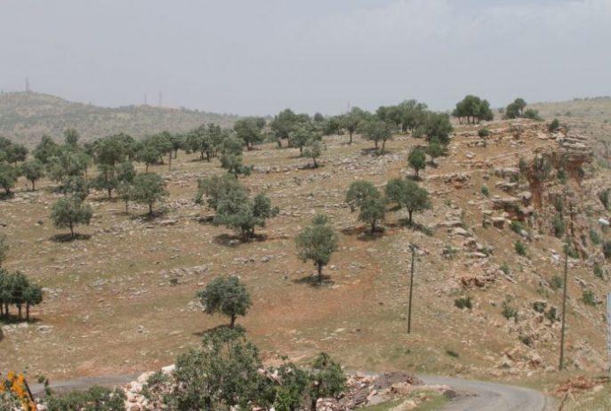 Tillo Tabiat Parkı Kamp Alanı