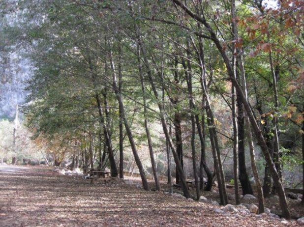 Yazılı Kanyonu Tabiat Parkı Kamp Alanı