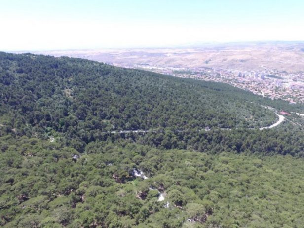 Yozgat Çamlığı Tabiat Parkı