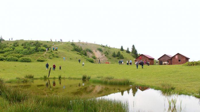 Badara Yaylası Kamp Alanı