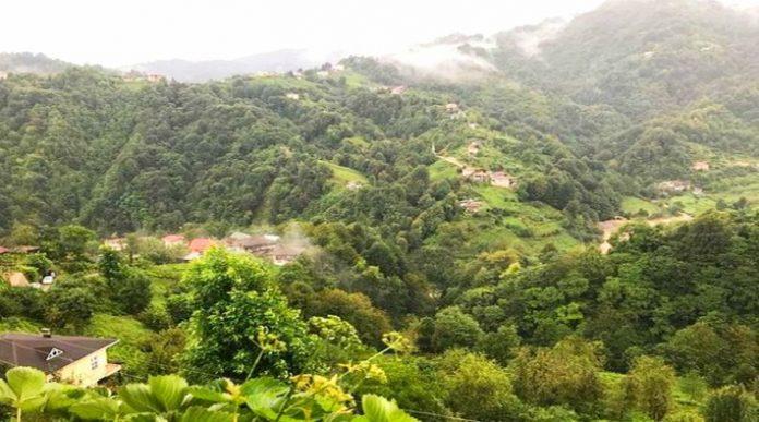 Bal Ormanı Kamp Alanı