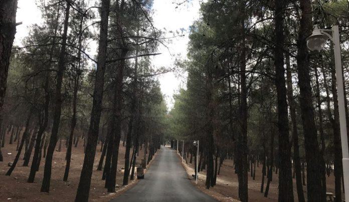 Burdur Kent Ormanı Kamp Alanı