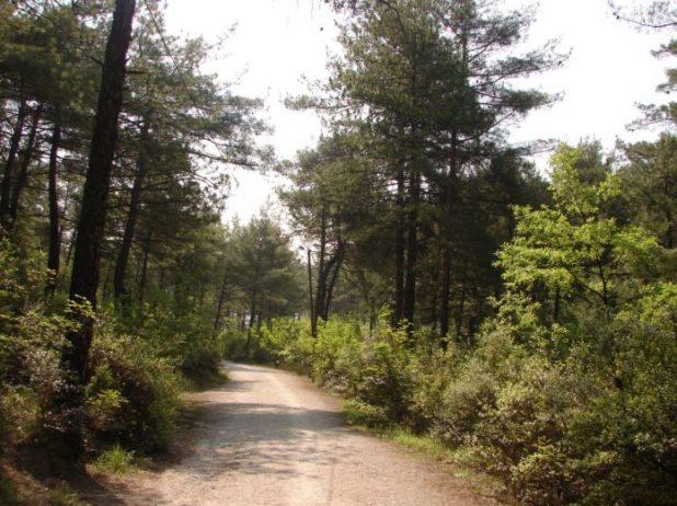 Çamlık Tabiat Parkı Kamp Alanı