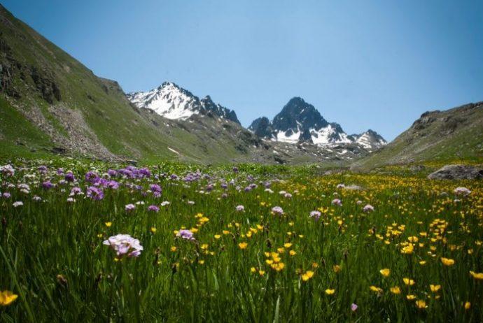 Kaçkar Dağlar Milli Parkı Kamp Alanı