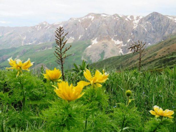 Pülümür Dağları Kamp Alanı