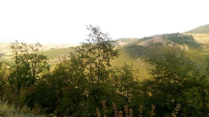 Şahin Yaylası Kamp Alanı