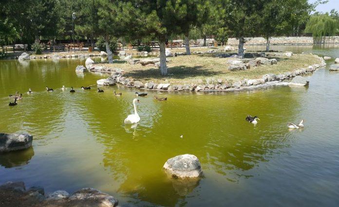 Yedikır Baraj Gölü Mesire ve Kamp Alanı