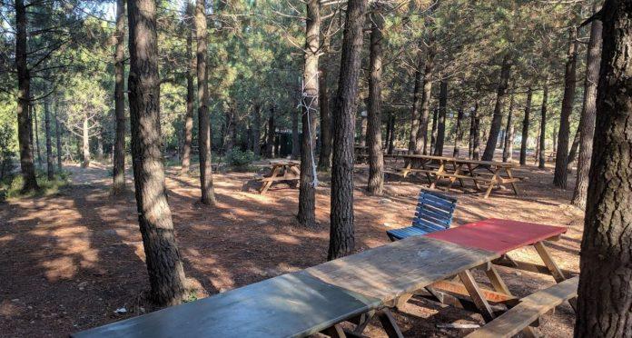 Başıbüyük Çamlık Piknik Alanı