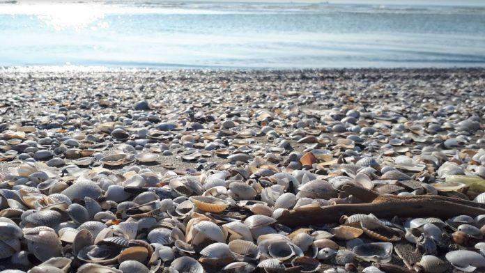 Adanalıoğlu Plajı